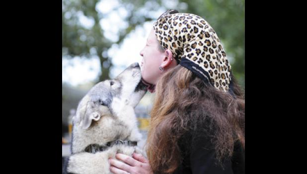 A wolf hybrid pup that has recovered from smoke inhalation during the January fire at Hollywild, gives carnivore keeper Laura Salzhauer a lick on the face.