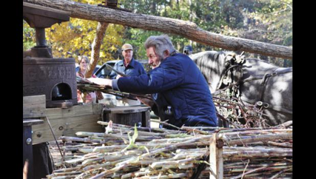 A volunteer feeds cane into a horse-drawn mill to make molasses during the event in 2011.