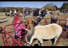 Farm animal exhibits and pony rides are a popular feature at Olde Tyme Farm Day. This year's event will take place Saturday at Vic and Gail Campbell's Log Cabin Farm 